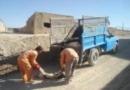 اتلاف 290 قلاده سگ ولگرد در شهر لار